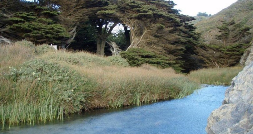 Pfeiffer Big Sur State Park to reopen after 11 months